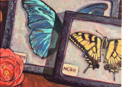 Specimens NC203 & 241