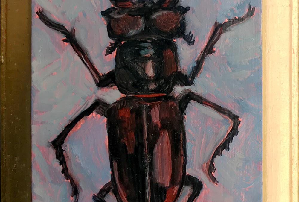 Specimen NC 2027 | Stag Beetle