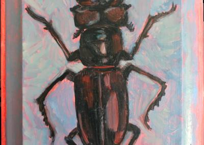 Specimen | NC 2027 Stag Beetle