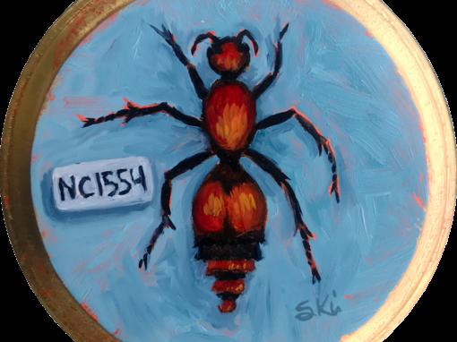 Specimen NC 1554 | Red Velvet Ant