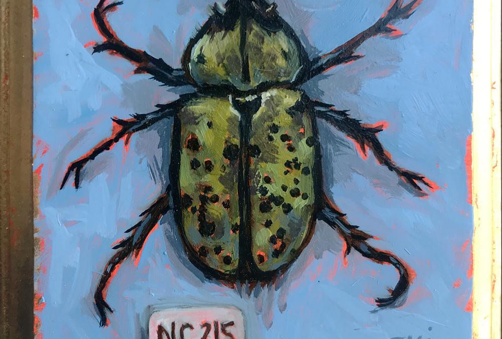 Specimen NC 215 | Hercules Beetle