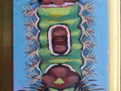 Specimen NO. 917 | Saddleback Caterpillar