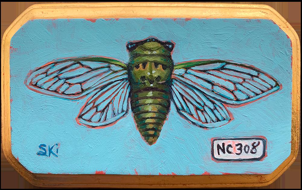 Specimen NC 308 | Cicada