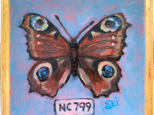 Specimen NC 799 | Peacock Butterfly