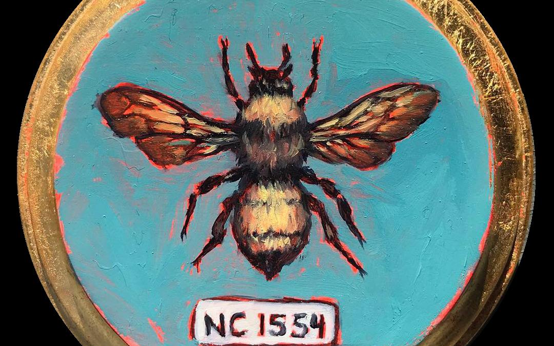 Specimen NC 1554 | Bumble Bee