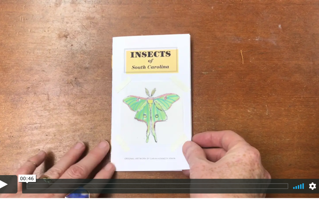 My Insect Zine