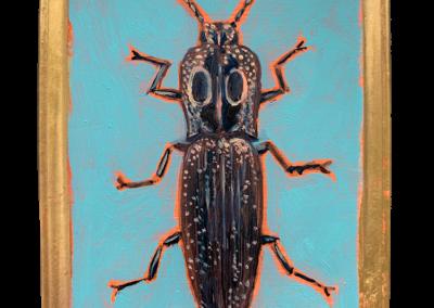 Specimen NC 161 | Click Beetle